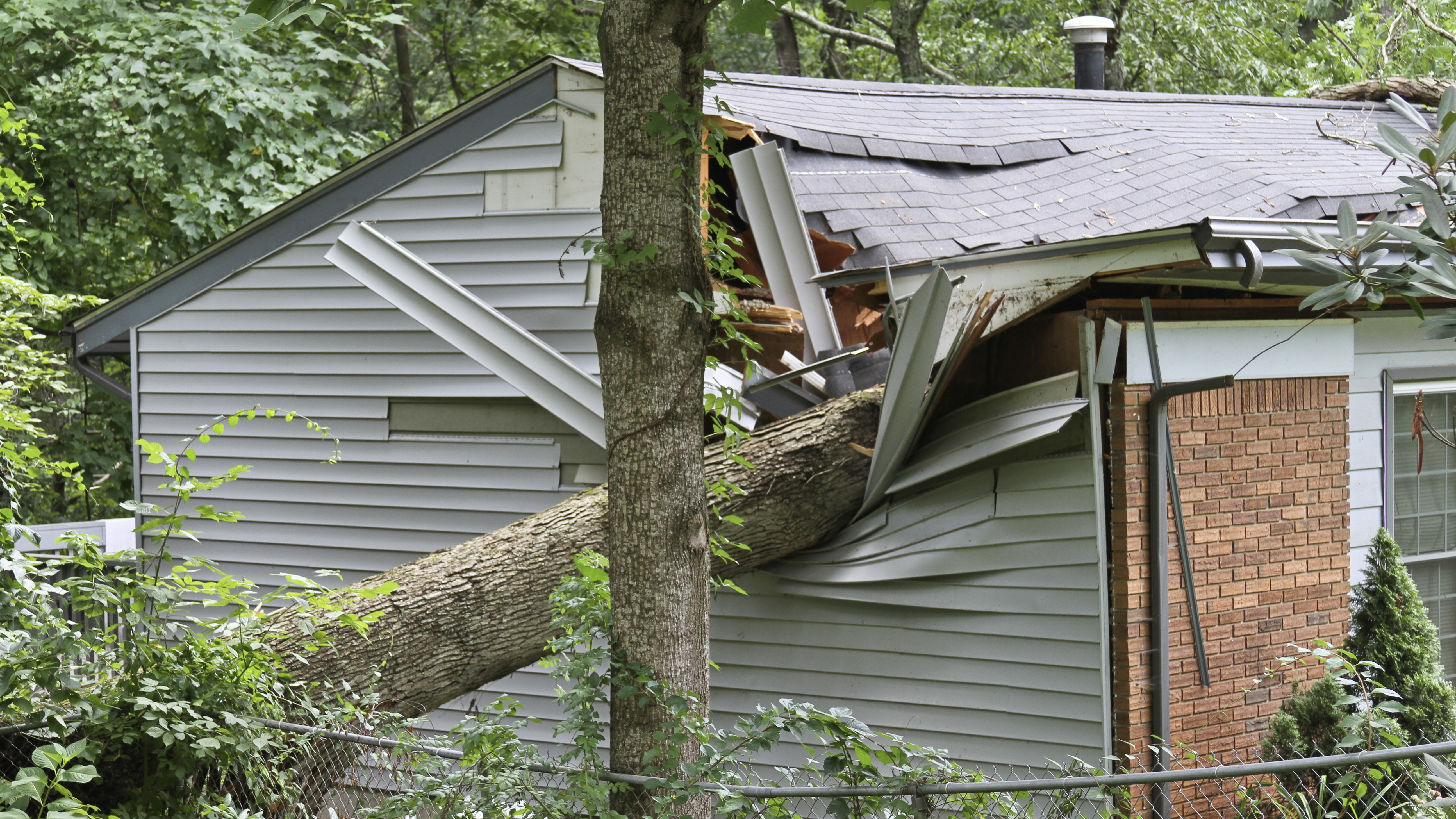 image of a fallen tree on the roof of a house.