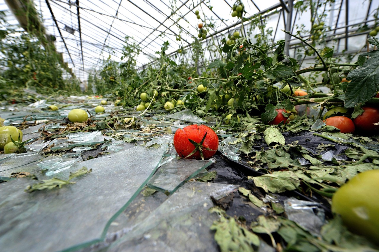 Greenhouse shattered by hail