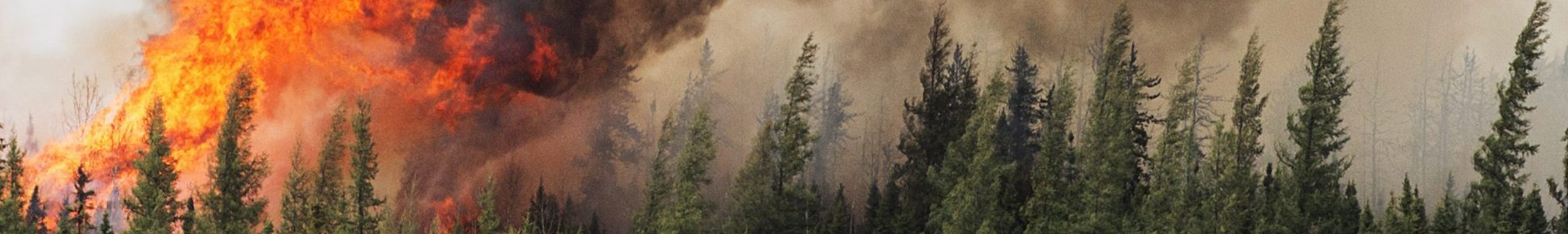In the spring of 2016, aided by high temperatures and strong winds, forest fires quickly spread out of control in the Canadian province of Alberta. It would turn out to be one of the costliest natural catastrophes in Canadian history.