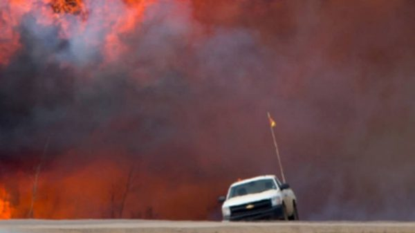 Wildfire – Causes, losses and consequences